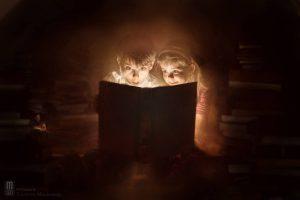 the_magic_book